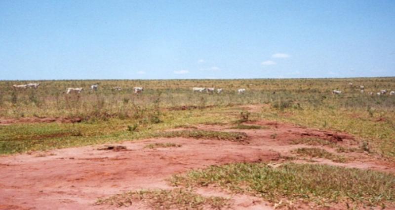 pastagem-area-degradada