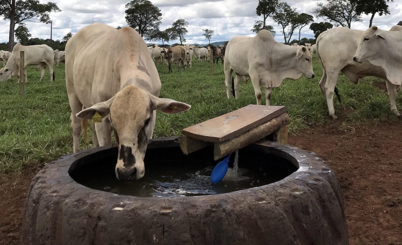agua-de-qualidade-na-pecuaria-deve-ter-protocolo-1