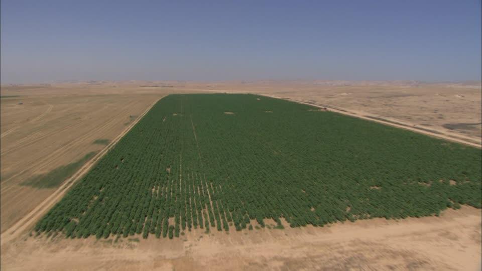 deserto-del-negev-israele-campo-agricoltura-luce-del-sole