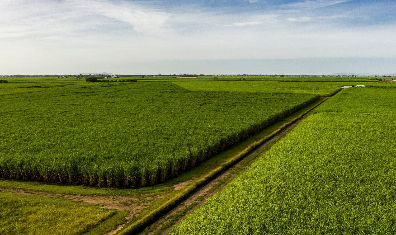 MS Cana, é uma tecnologia de nutrição para a cana-de-açúcar desde as primeiras fases da brotação até o período de maior desenvolvimento da Cultura