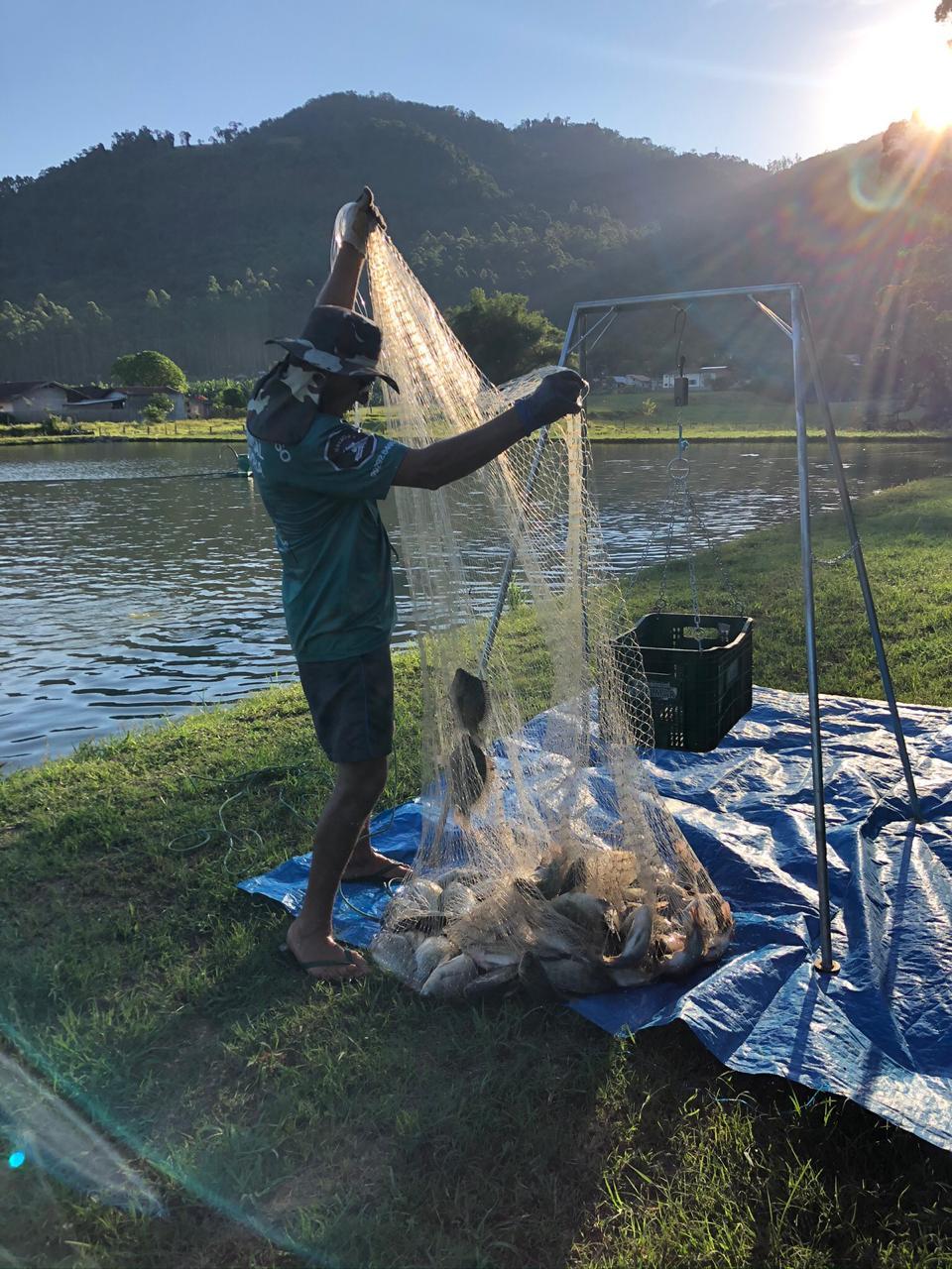 SC é o terceiro maior produtor de tilápias do Brasil