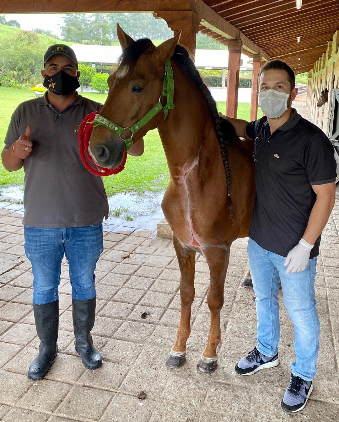 processo de necrose - cavalo recuperado