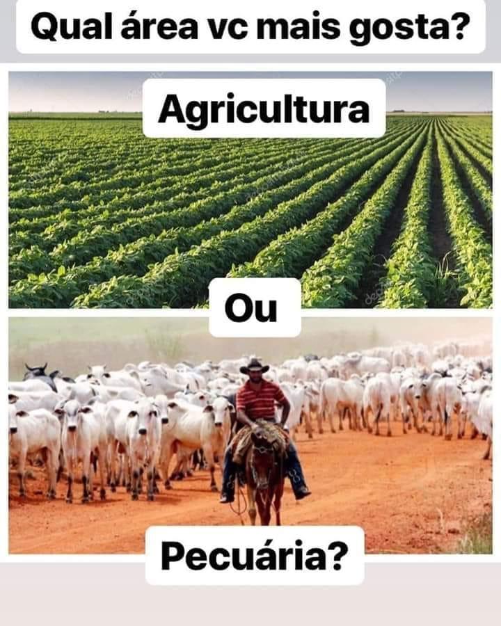 qual area vc mais gosta- agricultura ou pecuaria