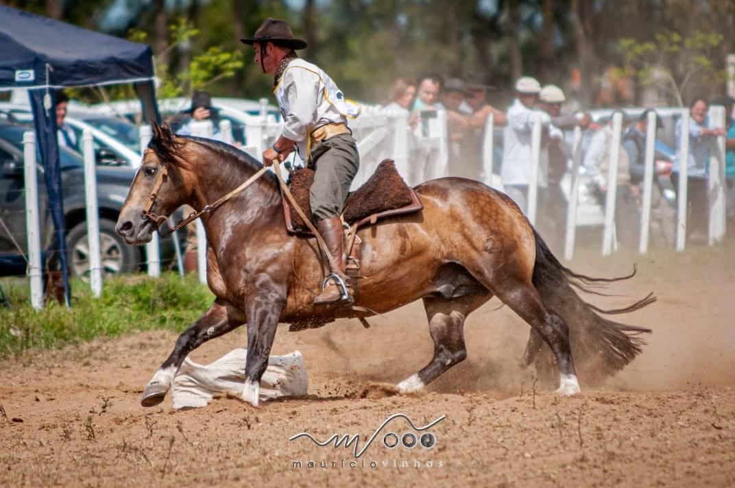 Morfologia-Freio cavalo crioulo