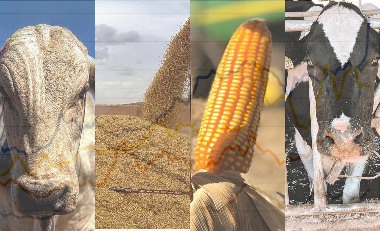 Veja a correlação dos preços de milho, soja, leite e boi
