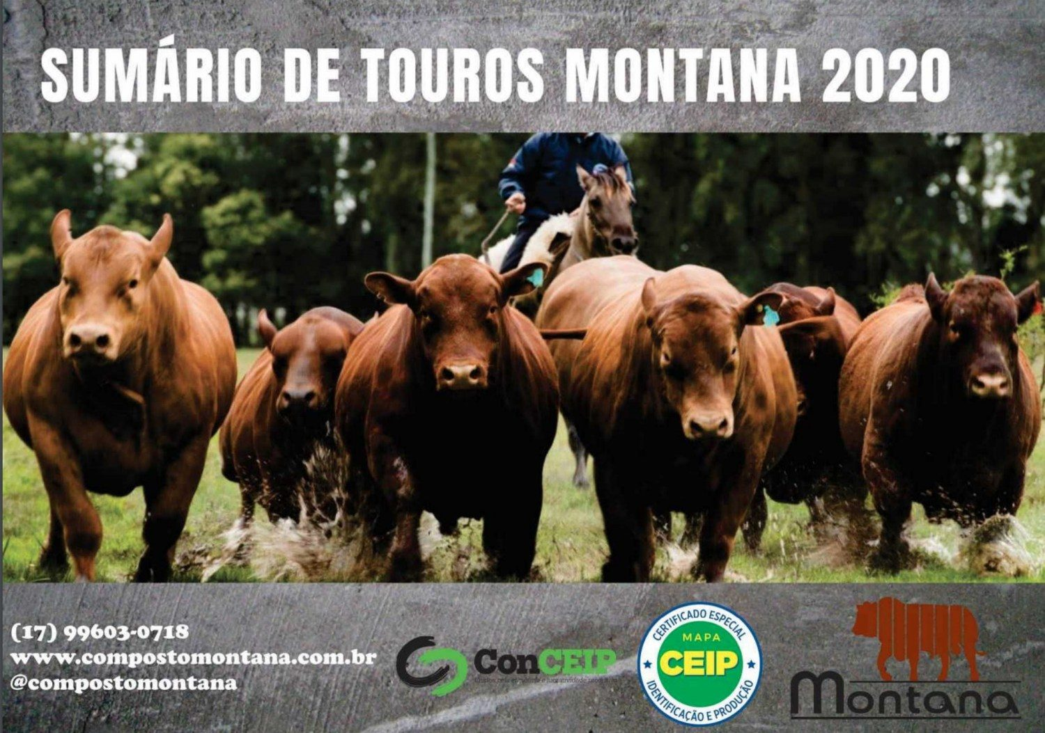 capa do sumario de touros montana 2020