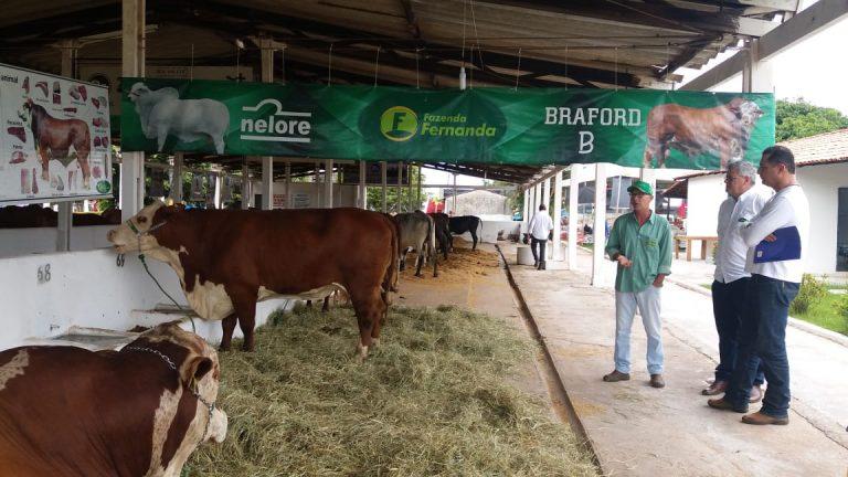 Braford-marca-presença-em-feira-no-Maranhão-2-1