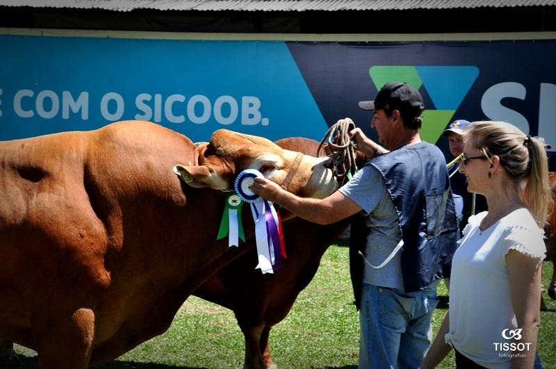 No centenário da ExpoLages, feiras e leilões de gado serão virtuais