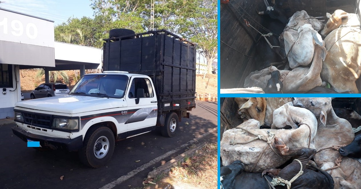 transporte irregular de animais 3