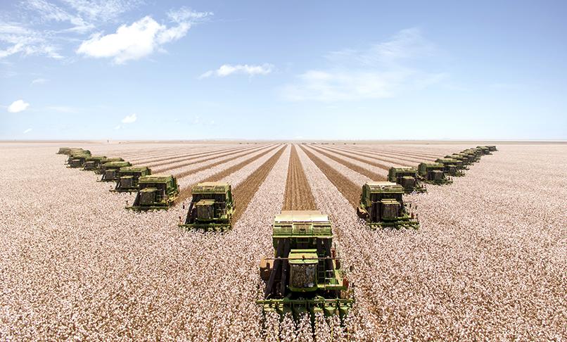 super colheita de algodão safra 2017 em Sapezal-MT