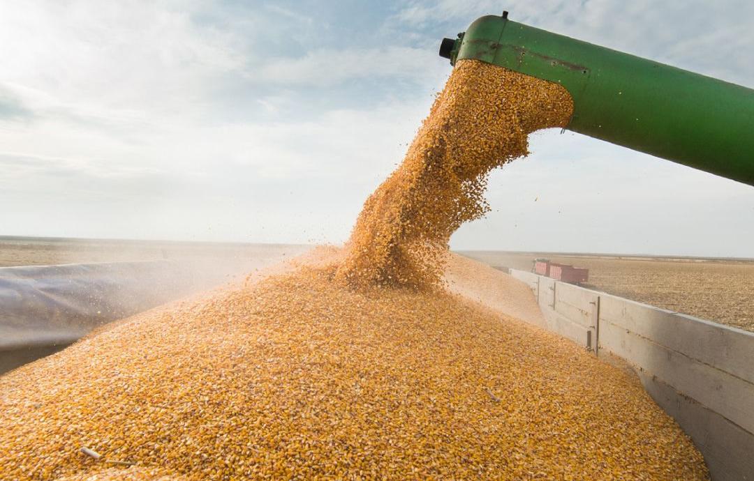 milho sendo carregado em caminhao