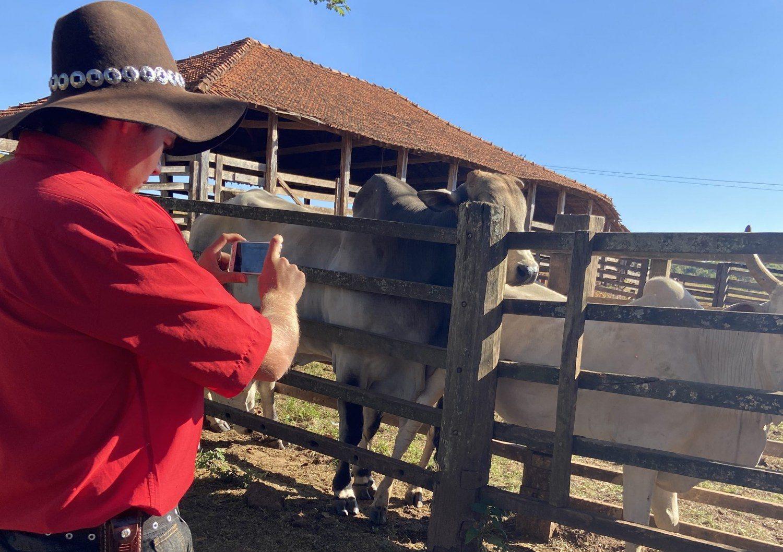 santos lab - App que pesa gado através de foto é lançado no Brasil