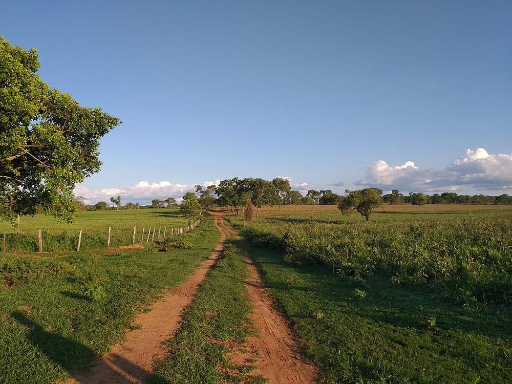 Pecuaristas se unem a ONG para preservar Pantanal