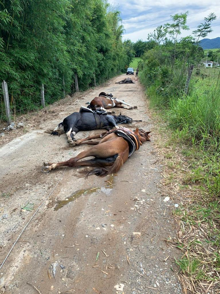 fio de energia solto mata cavalos 2