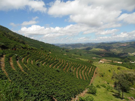 Café da região do Caparaó é reconhecido como Indicação Geográfica