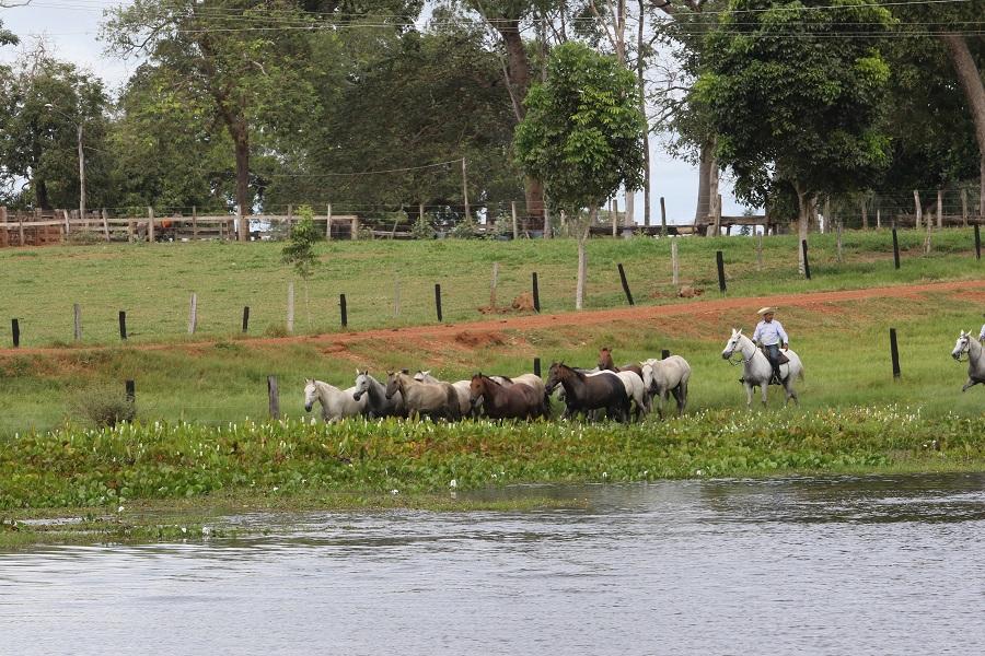 cavalo pantaneiro 2