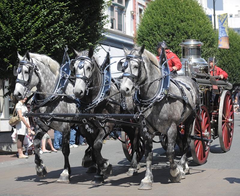 raça de cavalos percheron