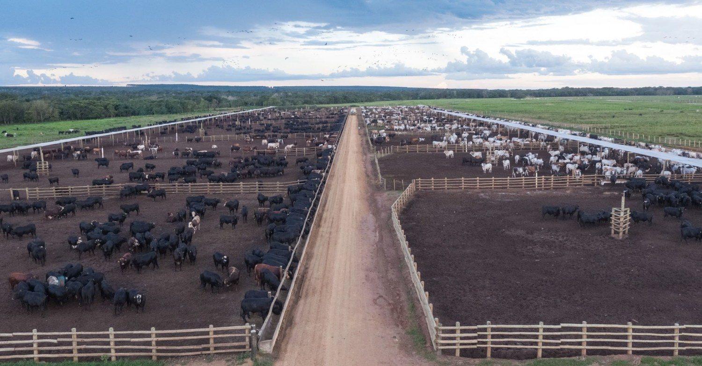 confinamento na fazenda Fartura em Campo Verde-MT