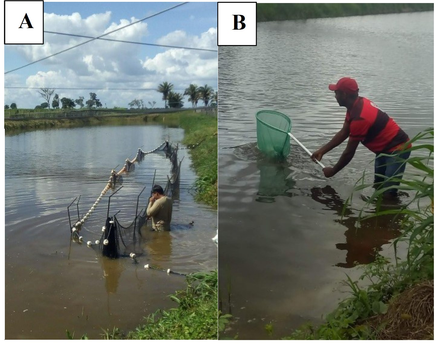 captura de peixes para analise