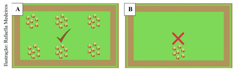 Figura 1: Distribuição de ração correta (A) e distribuição incorreta de ração (B).