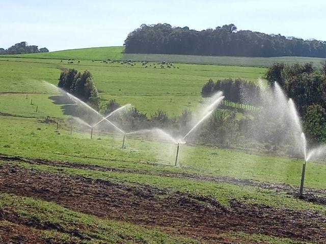 A pastagem é tratada como lavoura: na propriedade são cultivadas variedades altamente produtivas, que contam com sistema de irrigação. Foto: Celis Gaspareto