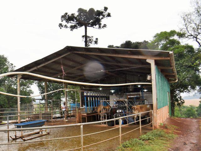 A sala de ordenha é um espaço compacto com contenção espinha de peixe e capacidade para nove vacas de cada lado. Foto: Celis Gaspareto