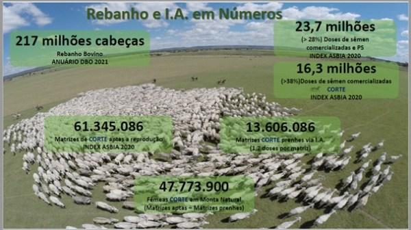 numeros da pecuaria brasileira e inseminacao artificial