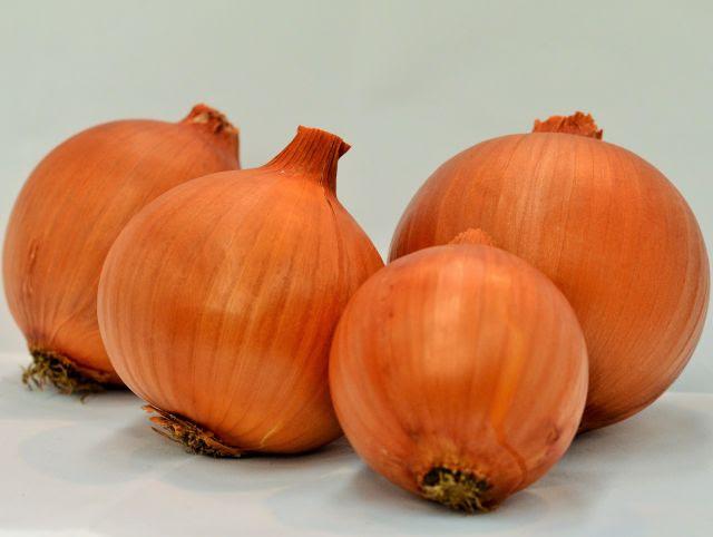 Com ciclo precoce e casca vermelho-amarronzada, a Cebola Valessul agrada produtores e comerciantes
