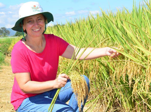 Cultivares de arroz da Epagri se adequam a diferentes condições de clima e solo de Santa Catarina, explica a pesquisadora Ester Wickert