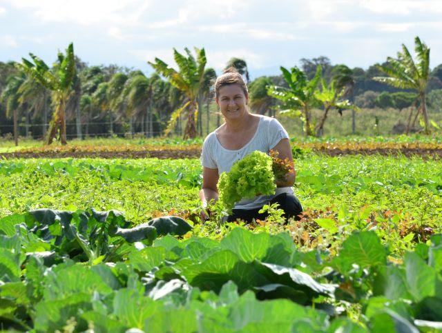 Novos cultivares são desenvolvidos para melhorar a vida do produtor, a qualidade do alimento e a sustentabilidade da agricultura