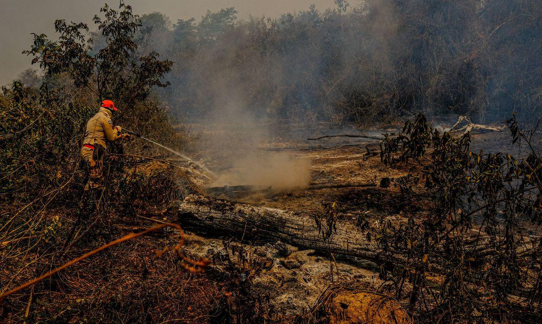 queimadas no pantanal de mato grosso do sul