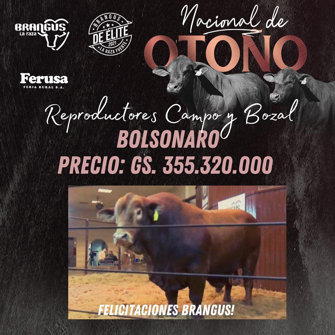touro brangus paraguai - bolsonaro ferusa
