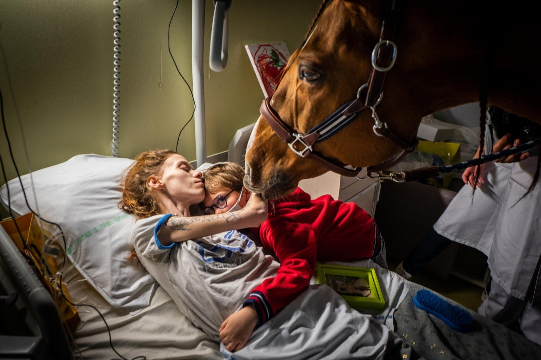 Peyo - cavalo ajuda pacientes em hospital 2