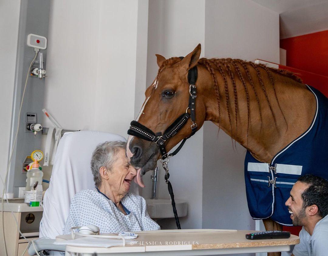 Peyo - cavalo ajuda pacientes em hospital 3