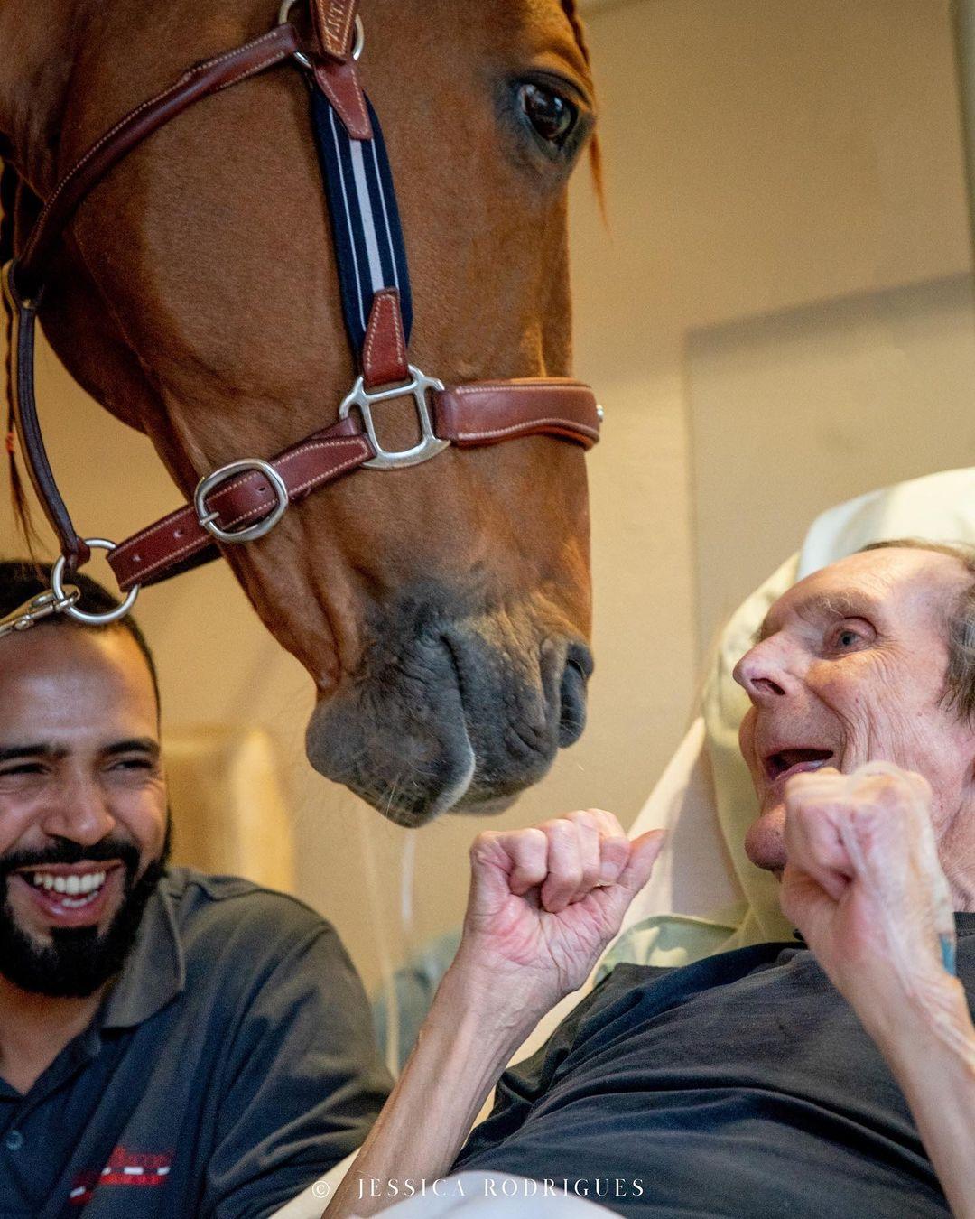 Peyo - cavalo ajuda pacientes em hospital