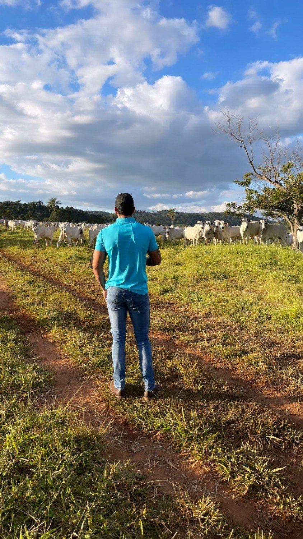 gusttavo lima - avaliando gado