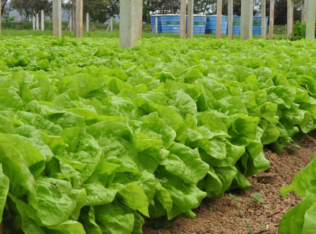 Insumos naturais são alternativas para o cultivo de alimentos orgânicos