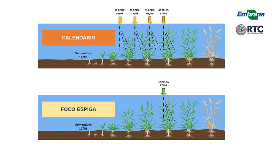 Manejo na aplicação de fungicidas nos experimentos