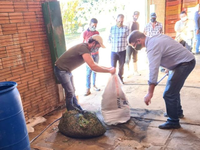Sacos cheios de biomassa verde são usados no preparo do fertilizante líquido