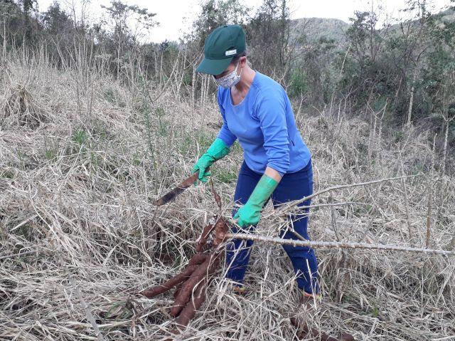 """""""No SPDH a qualidade do solo é muito melhor e as plantas sofrem bem menos na estiagem"""", diz a agricultora Izelda de Lima, de Seara"""