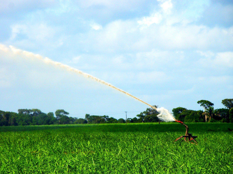 Bico de irrigação em lavoura de cana em Alagoas