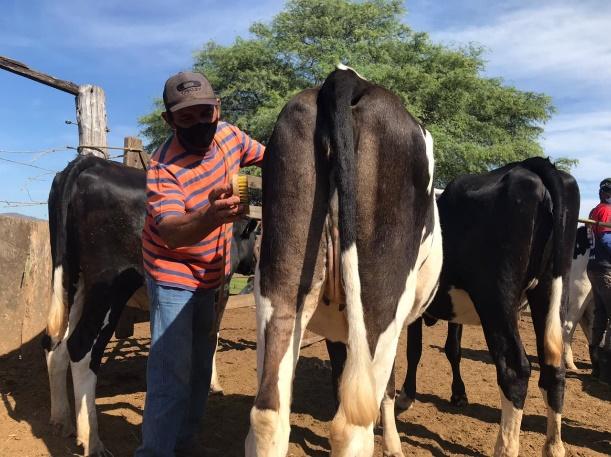 Doma Racional de novilhas para ordenha surpreende produtores experientes; técnica derrubou hábitos antigos e provou que carinho dá mais leite sim!