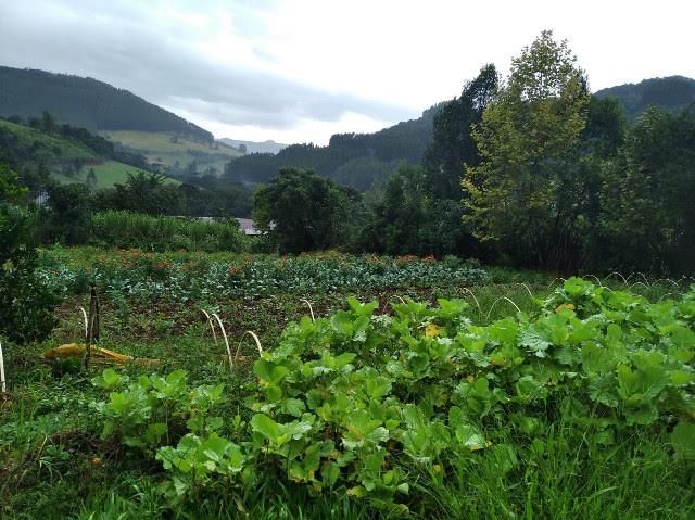 Família apostou na produção de hortaliças orgânicas