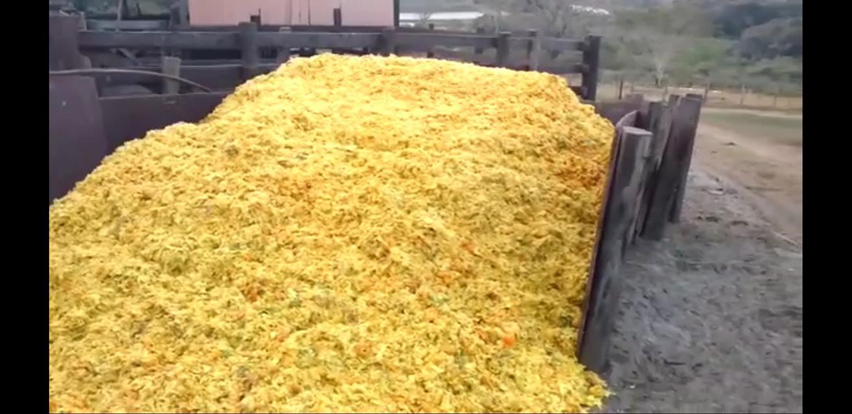 bagaco de laranja para o gado