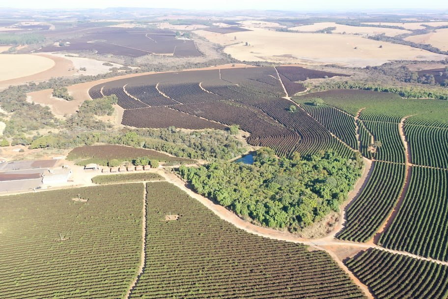 foto drone cafezais geada no sul de minas