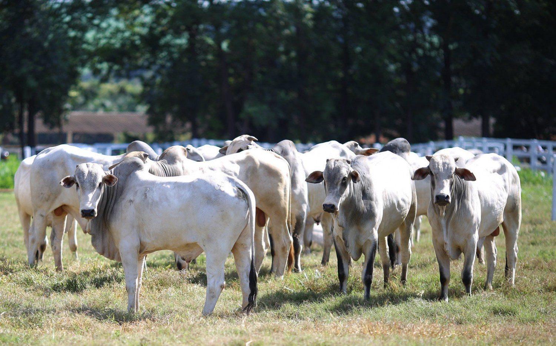 Dia de campo campo na Fazenda Santa Brígida, sobre integração lavoura pecuária floresta 1