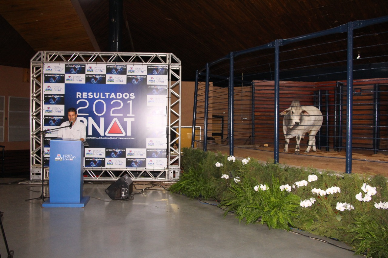 Touro Brahman branco MR BR 77 1763 finalista do PNAT 2021