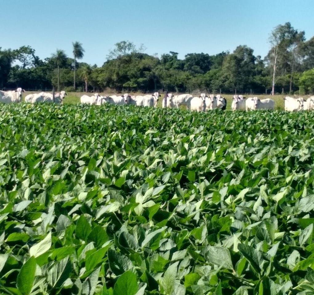 Família torna fazenda eficiente e rentável com a ILP