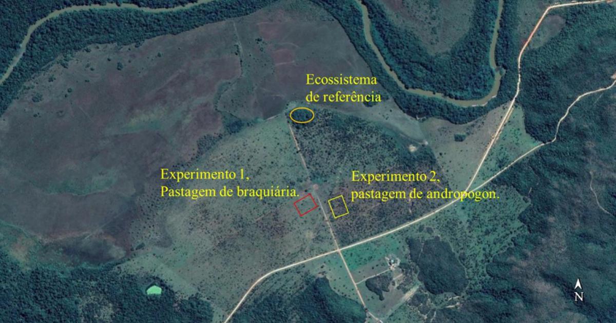 Localização dos experimentos e do ecossistema de referência da área experimental – Foto: Imagem Google / CNES/Airbus, Maxar Technologies